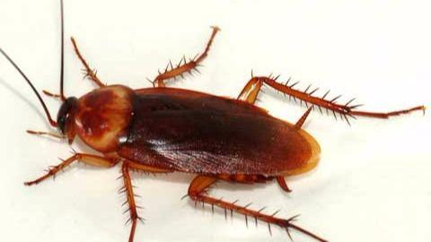 Como acabar con una plaga de cucarachas solo amor - Como matar las moscas de mi casa ...