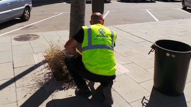 ASIMA limpia calles y jardines ante