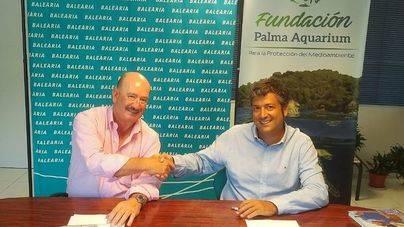 Baleària llevará tortugas marinas heridas al Palma Aquarium