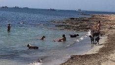 Mallorca cuenta con 5 playas caninas