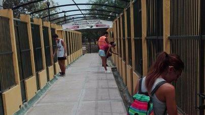 La adopción de animales aumenta un 60 por ciento en Palma en dos semanas