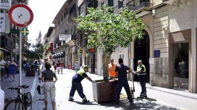 El Ayuntamiento ha comenzado a instalar las medidas de seguridad en las calles peatonales más concurridas de Palma