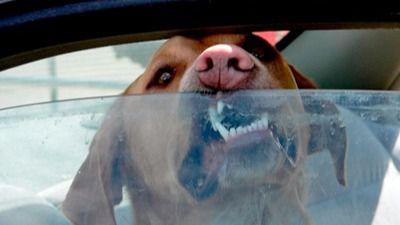 Mueren nueve de los diez perros que un hombre dejó encerrados en su coche