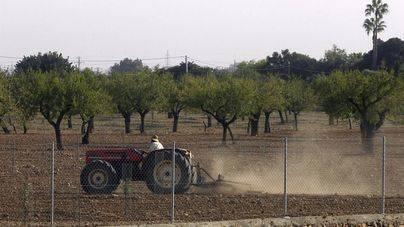 Unió de Pagesos alerta de la muerte de gran parte de las plantaciones de almendros y otros árboles frutales