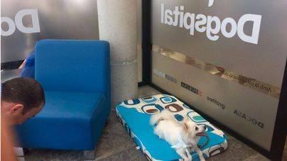 Galardón a Dogspital, el programa de visitas de perros a pacientes ingresados en Can Misses