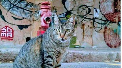 Los gatos de Canamunt se quedan sin casa