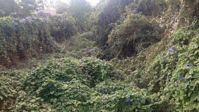 La conselleria sigue sin fecha de inicio para la limpieza de los torrentes