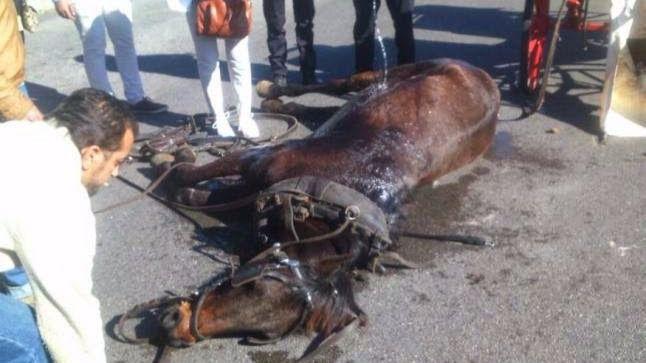 """AnimaNaturalis exige a Cort que ponga fin a las galeras """"por explotar"""" a los caballos"""