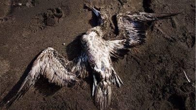 Casi 200.000 aves mueren cada año en Europa atrapadas en redes de pesca