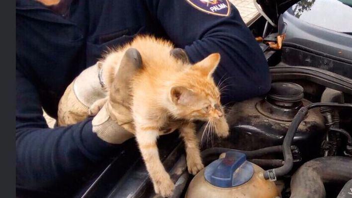 Los bomberos rescatan un gatito del motor de un coche en Son Sardina