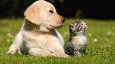 Se presenta la Proposición de Ley a favor de #AnimalesNoSonCosas