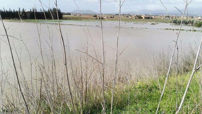 El Consell reclamará al Gobierno ayudas por el temporal para Porreres, Montuïri y Algaida