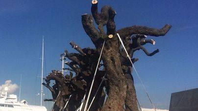 La Conselleria prevé 6.000 hectáreas de nuevas plantaciones por la Xylella