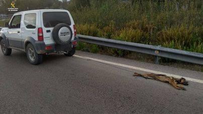 Absuelto el hombre que arrastró a un perro atado a su coche en Cádiz