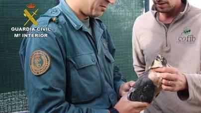 La Guardia Civil lleva a cabo una operación contra el comercio ilegal y el expolio de aves rapaces