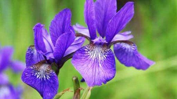 Flores y plantas que crecen aunque haga frío