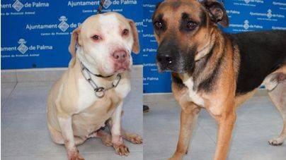 Desfile en Son Reus de perros abandonados: 'No compres, ven y adopta'