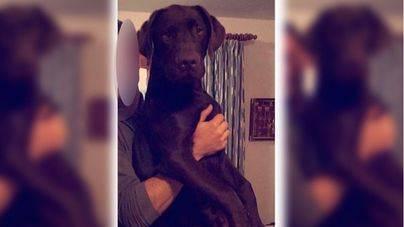 Un vecino de Son Negre denuncia que han ahorcado a su perro