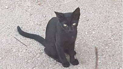 Piden ayuda a Cort para salvar los gatos del antiguo estadio del Baleares