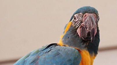 Imagen de una de las aves