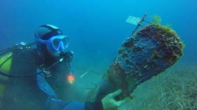 El Oceanogràfic descubre un tratamiento para salvar la nacra