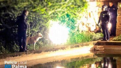 Rescatado un perro que cayó al estanque de los cisnes de s'Hort des Rei desde Dalt Murada