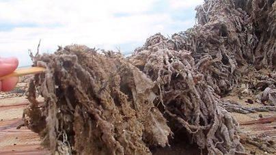 'Ana' saca a flote la degradación ambiental de la bahía de Palma