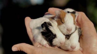 El Centro de Recuperación de Fauna pone en marcha una campaña contra el abandono de animales