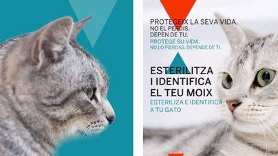 Calviá concluye la campaña de esterilización de gatos domésticos