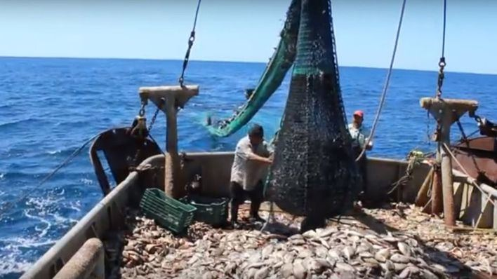 Cambian las redes de arrastre de la flota pesquera balear para proteger el fondo marino