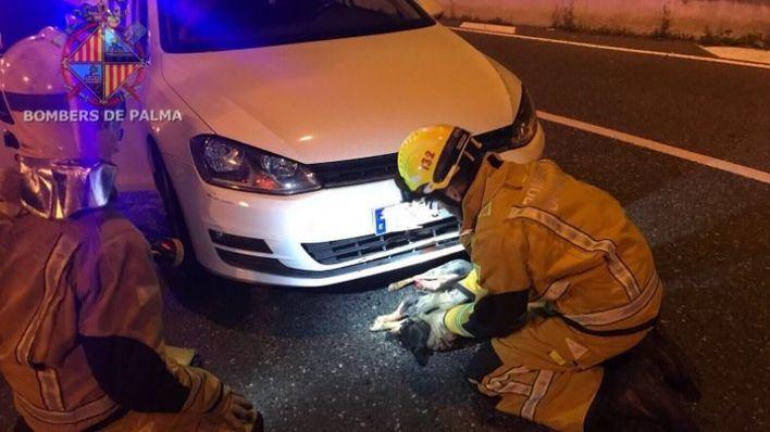 Bombers de Palma rescatan a un perro atrapado bajo un coche