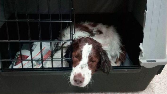 Rescatan del agua en el Port de Sóller a una perra mayor y ciega