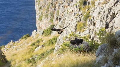 Los ecologistas solicitan un acuerdo para regular el paso a la finca de Ternelles en Pollença