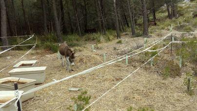 Imagen de uno de los burros