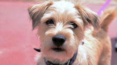 Calvià interpone 12 denuncias por incumplimiento de la ordenanza de Bienestar Animal