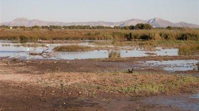 El GOB acusa al Govern de 'dar la espalda' a s'Albufera con el Plan Hidrológico