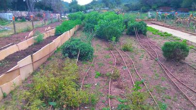 El Ajuntament de Calvià estudiará la viabilidad de un Banco de tierras en el municipio