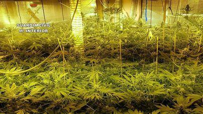 La Guardia Civil desmantela un vivero de 163 plantas de marihuana en un domicilio de Llucmajor