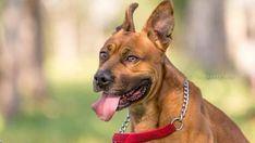 Dos tercios de los perros que desfilaron en Son Reus ya han sido adoptados