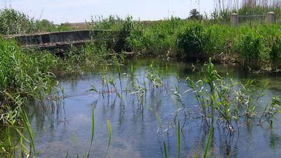 Plantan 6.800 plantas de ribera en S'Albufera mediante un proyecto financiado con la ecotasa