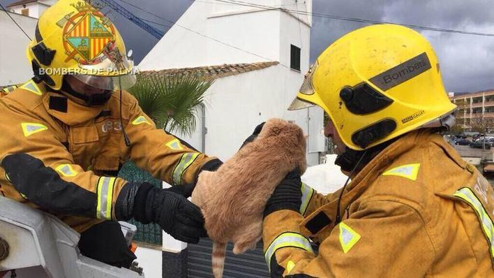 Insólito rescate de un gato sobre el tejado por parte de Bombers de Palma