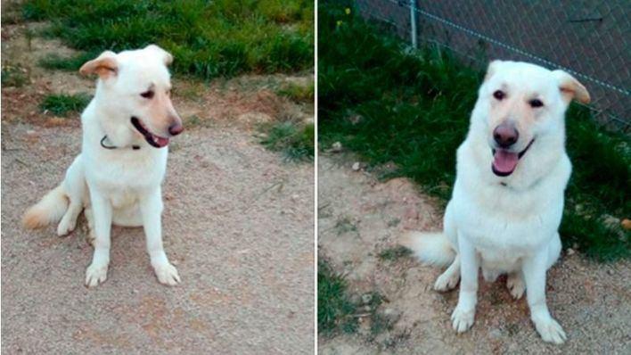 Robin, el perro apaleado por su dueño en Palma, busca familia