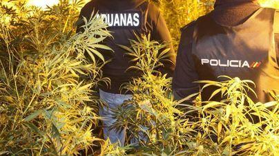 El Hoyo se consolida como el principal centro de tráfico de marihuana en Palma
