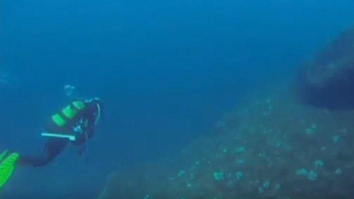 Estudian trasladar a las 10 nacras vivas de Balears para salvar la especie