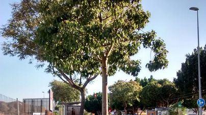 Cort inicia la reparación de alcorques en varios barrios de Palma