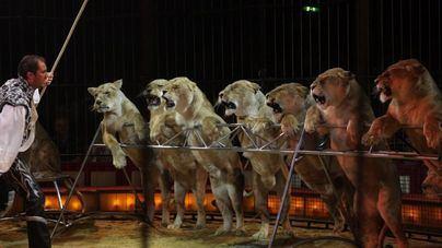 Imparcialidad de opinión sobre la prohibición del empleo de animales en todos los circos de España