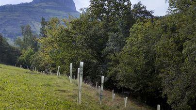 La Asociación Balear del Árbol oferta un curso de identificación de especies arbóreas
