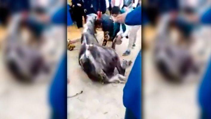 Muere un caballo en la Feria de Abril por no comer ni beber en 24 horas