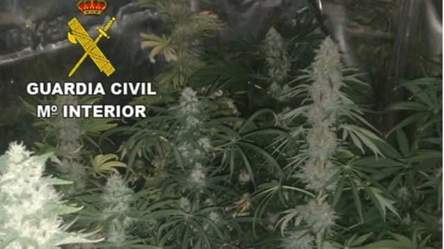 Detenida una persona por cultivar marihuana en el interior de un armario