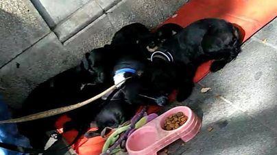 Denuncian a Cort a un indigente por presunto maltrato a sus perros